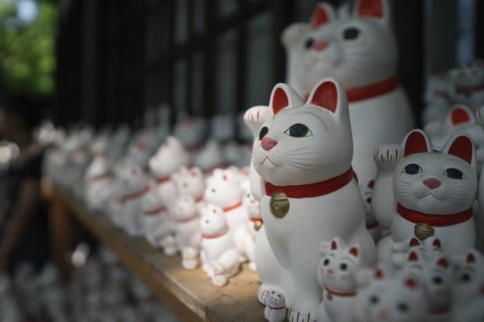 bức ảnh nhiều con mèo mamki neko ở đền gotokuji gần Tokyo