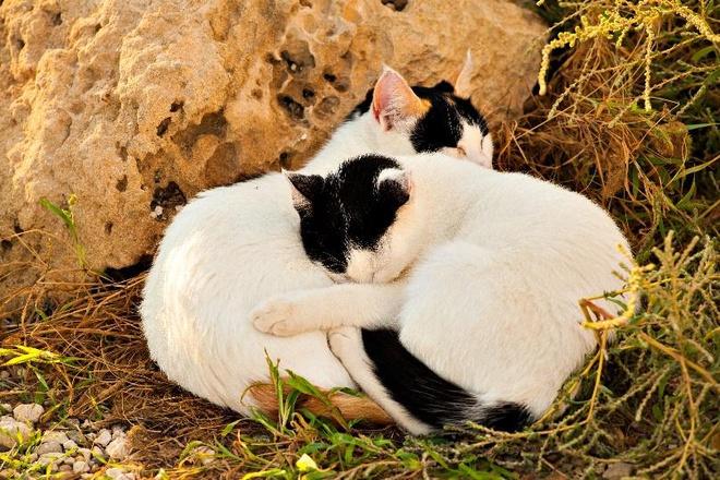 Dù là mèo nhà hay mèo hoang ở Nhật đều được chăm sóc rất kỹ lưỡng.