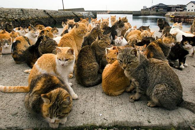 Từ những con mèo đầu tiên được đem lên đảo để bắt chuột nay số mèo tại đảo đã tăng lên 120 con.